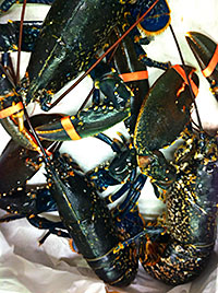 Not shelling out: Derek Marshall has taken lobster off the menu at Gamba.