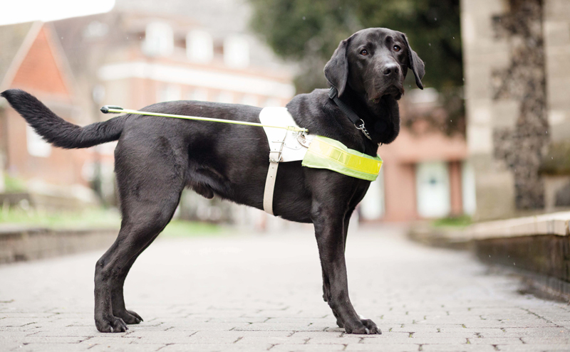 Guide dog owners who feel welcome can be good ambassadors for a venue, according to Emma Brown.